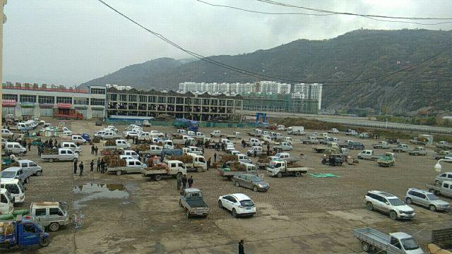 2019年10月20日岷县中药材市场快讯(黄芪鲜货大量上市交