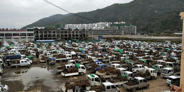 2020年9月22日岷县中药材市场快讯(天气阴,市场整体上货