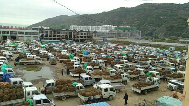 2020年9月23日岷县中药材市场快讯(产地市场人流量不大,