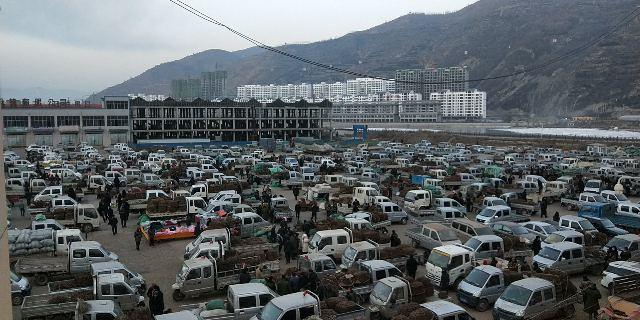 2021年1月22日岷县中药材市场快讯(今日当归新货药厂、小