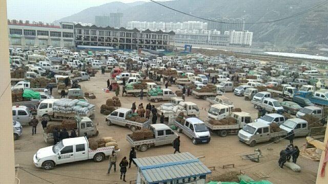 2021年1月24日岷县中药材市场快讯(黄芪新货上货量大,货