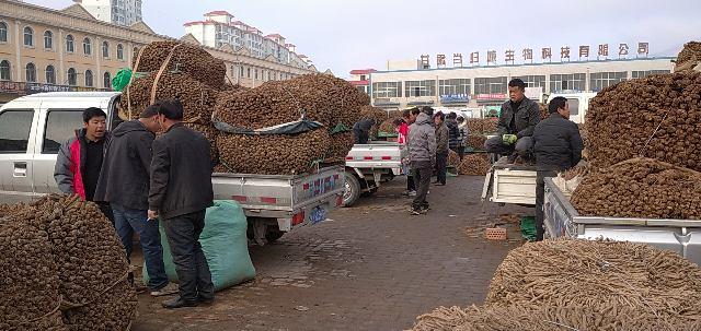 2021年3月8日岷县中药材市场快讯(当归药厂投料规格交易价