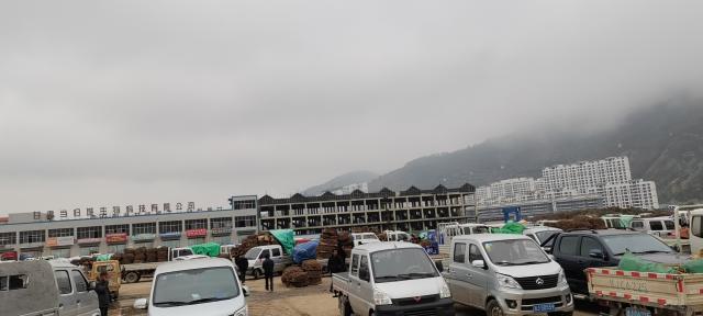 2021年10月18日岷县中药材市场快讯(当归上货量有所增加
