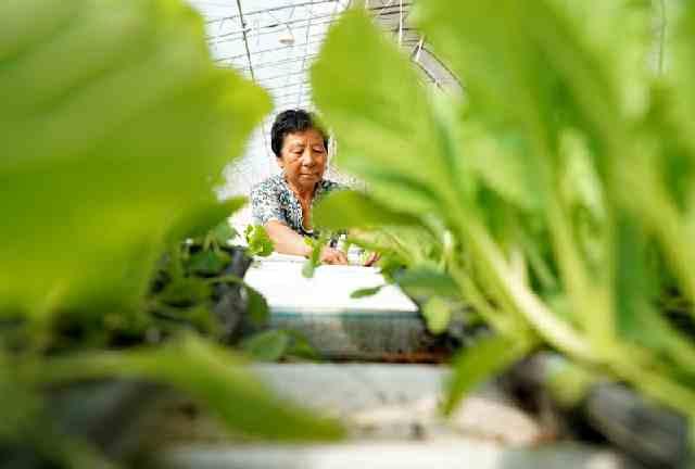 河北滦州:设施农业促增收