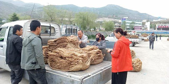 2020年6月4日岷县中药材市场快讯(当归饮片上货量有所增多